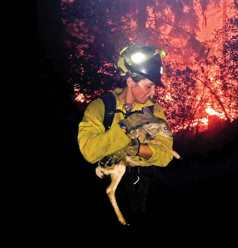 """A U.S. Forest Service firefighter rescues a fawn near Prescott Valley as the Goodwin Fire rages on. Across the American West, highly trained """"hotshot"""" crews work in the hottest parts of wildfires as part of collaborative efforts to manage the fires' spread."""